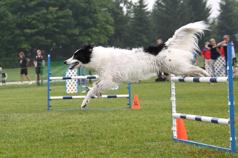 Dog Training Classes Maple Ridge